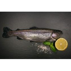 Forelle ganzer Fisch küchenfertig (oncorhynchus mykiss)