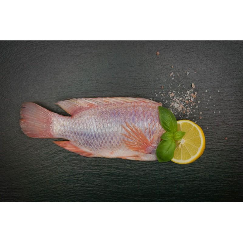 Sachsenbarsch ohne Kopf küchenfertig (oreochromis niloticus)