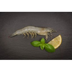 Garnele (White leg / Litopenaeus vannamei)