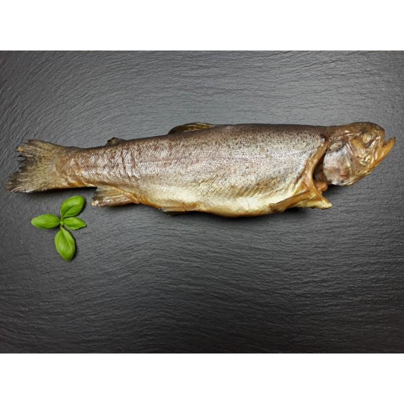 Forelle ganzer Fisch geräuchert (oncorhynchus mykiss)