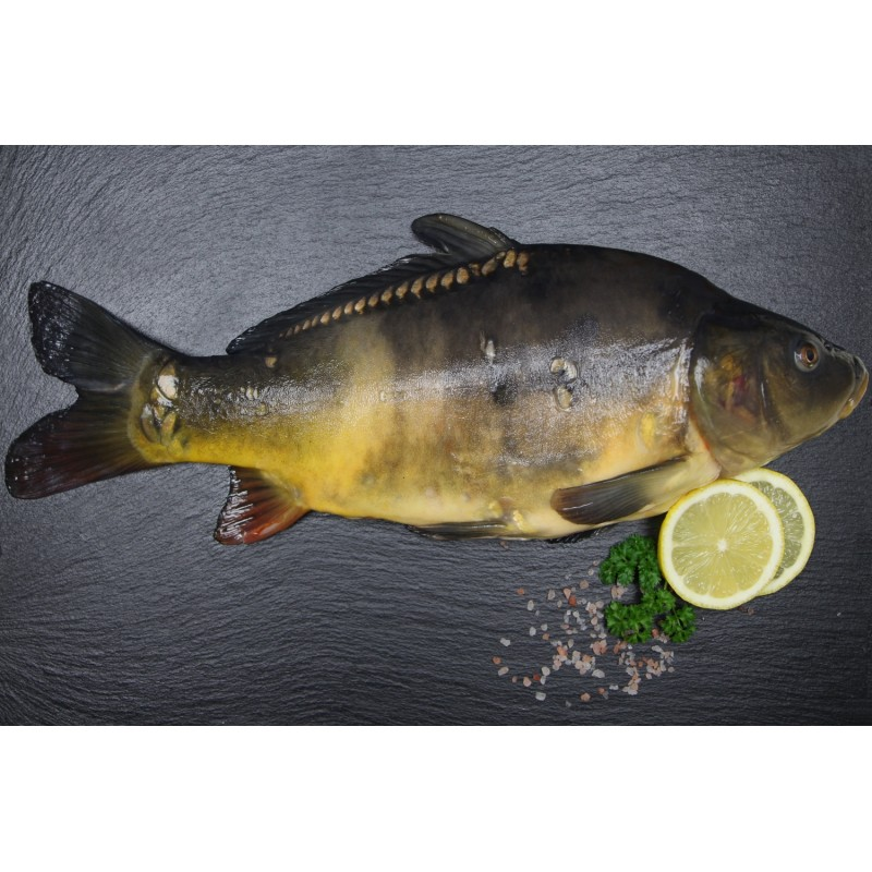 Karpfen ganzer Fisch küchenfertig (cyprinus carpio)