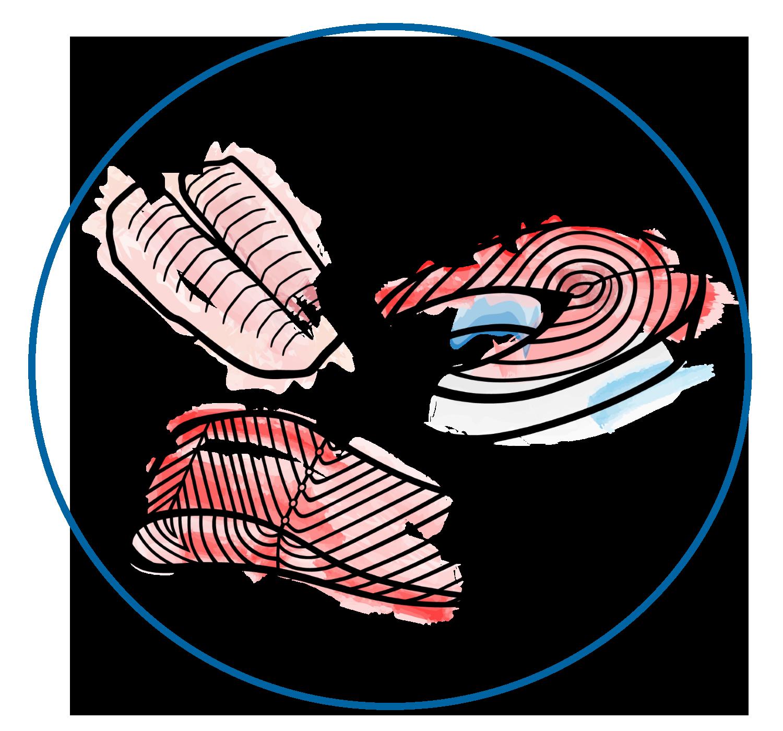 Skizze Filets sachsenfisch.de