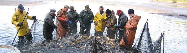 Fischzucht Karsten Ringpfeil